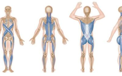 Interesting Facts About Your Back